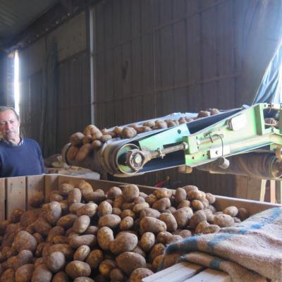Pommes de terre 2015