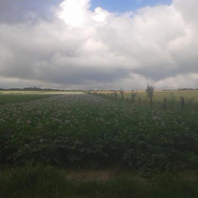 c'est de l'Agro-Foresterie :)