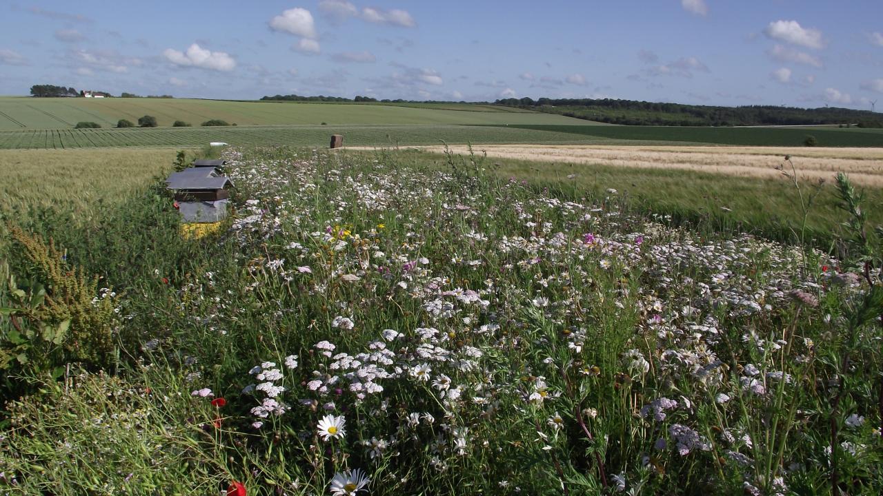 Blumenstreifen mit Bienenhaus