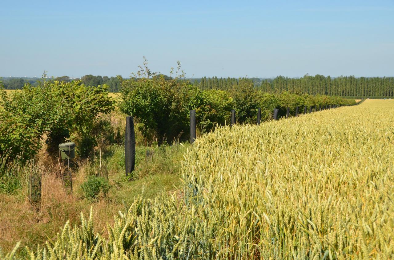 agroforesterie 07-2015