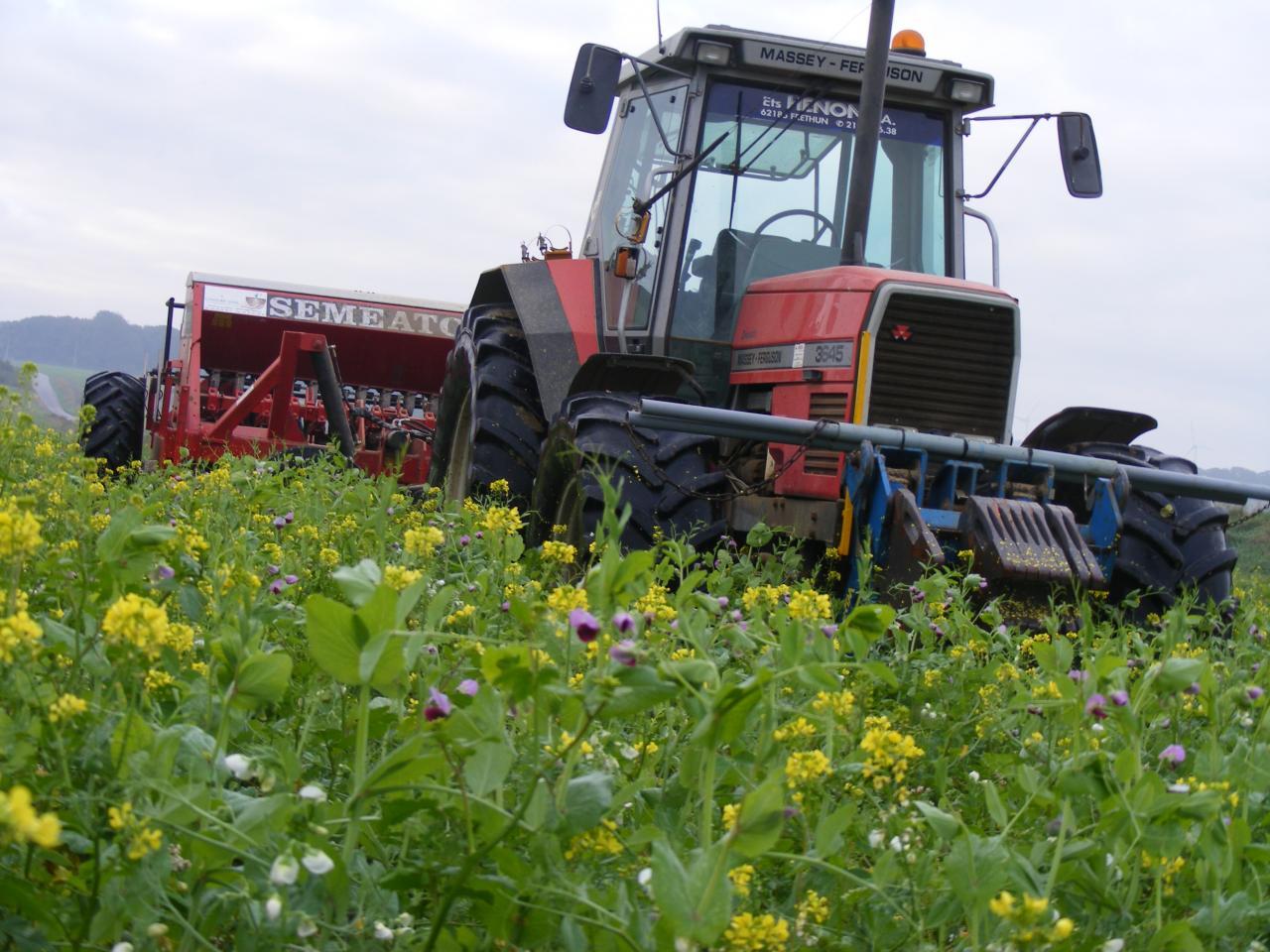 SD de blé 2010