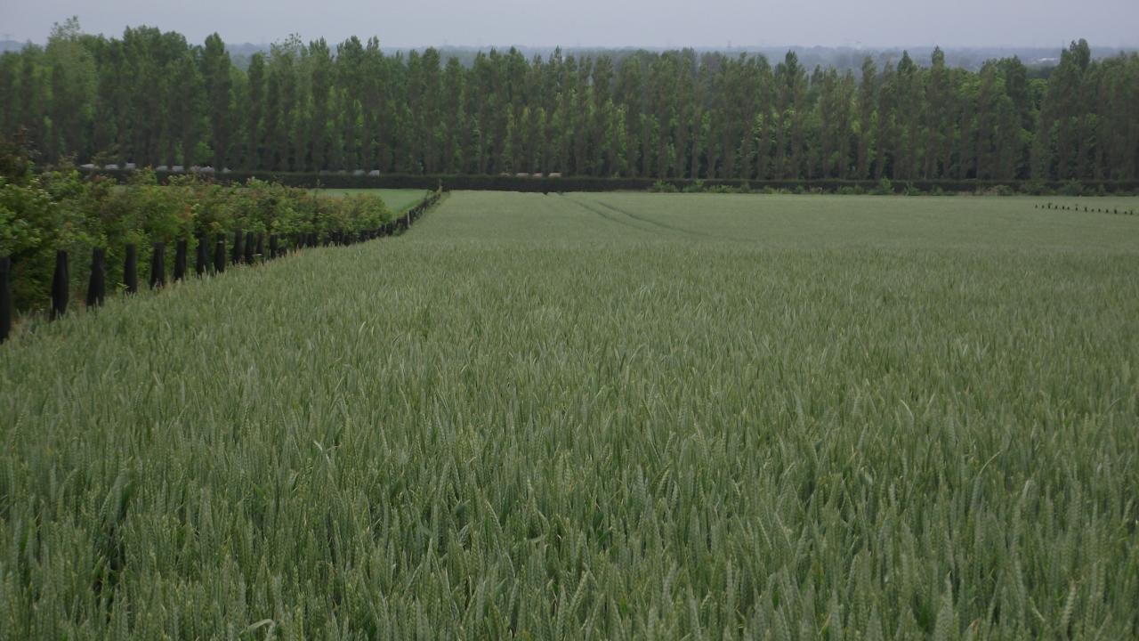 Forstwirtschaft im Getreide