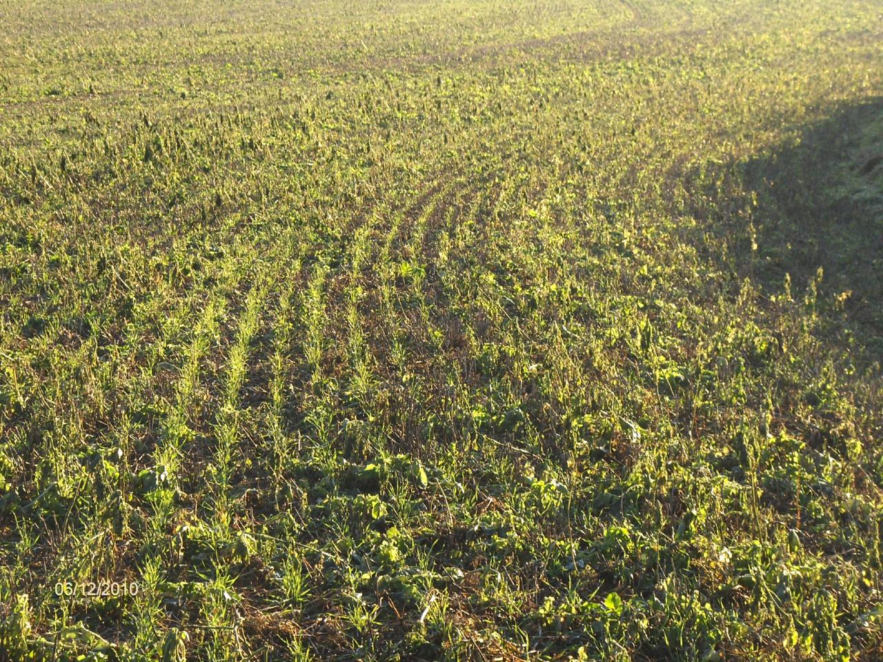 SD blé 2010