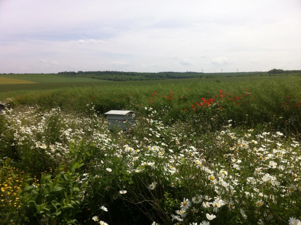 Bienenstock im Grün- bzw. Blumenstreifen