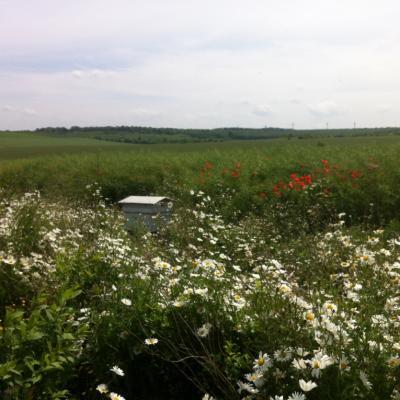 Bandes fleuries avec ruches