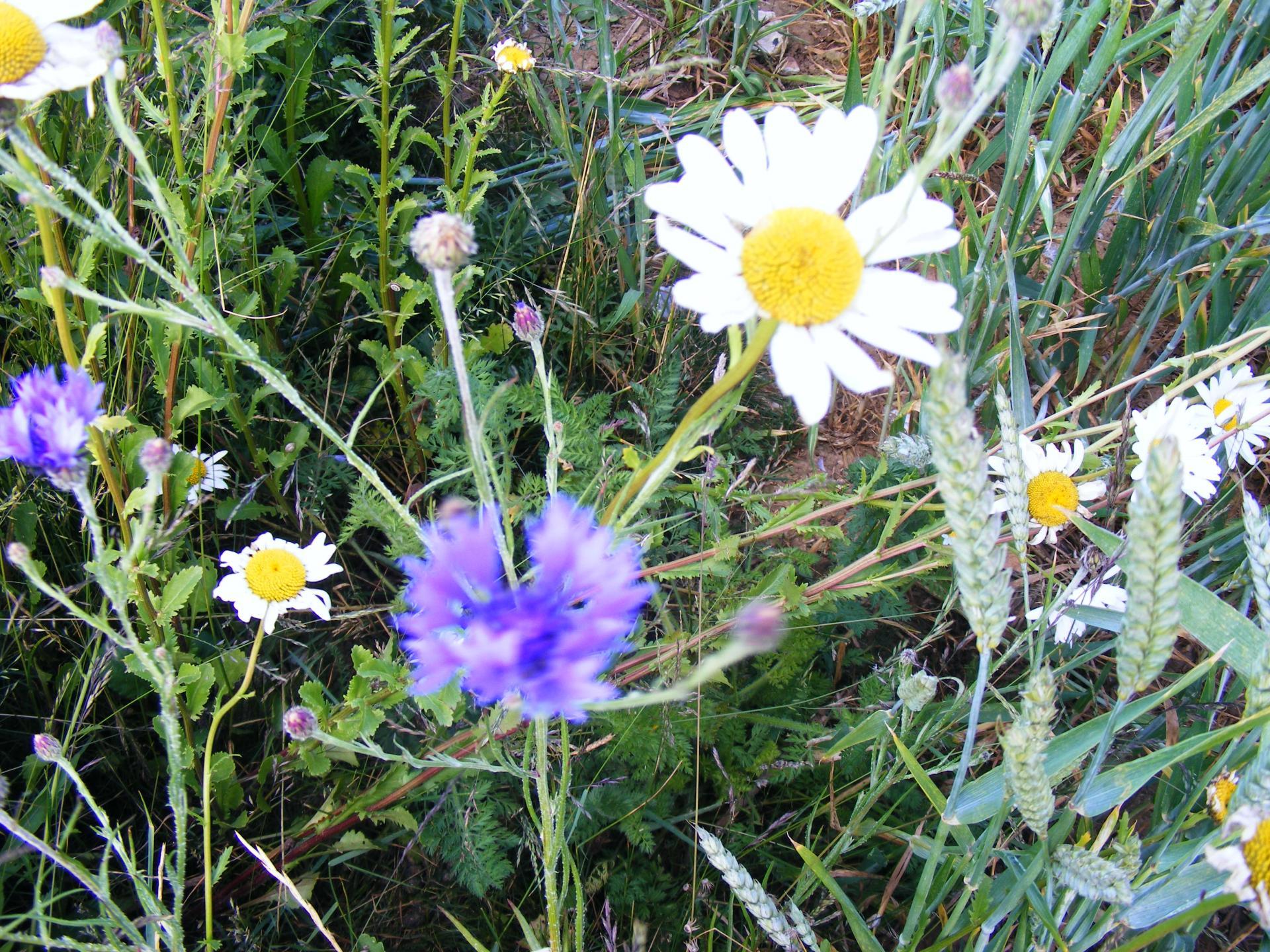 2011 06 10 prp bas volume bandes fleuries