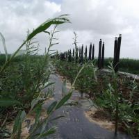 3e site d'agroforesterie avec fruitiers