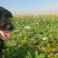 Hund im grundunger 20161009